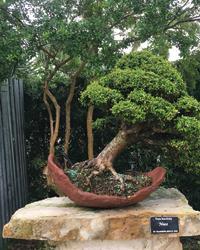 Heathcote-Botanical-Gardens-Inc